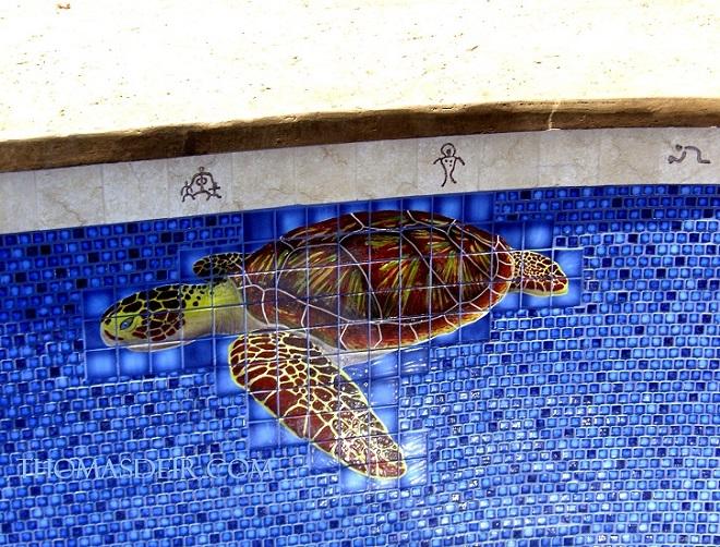 pool wall tile mural turtle