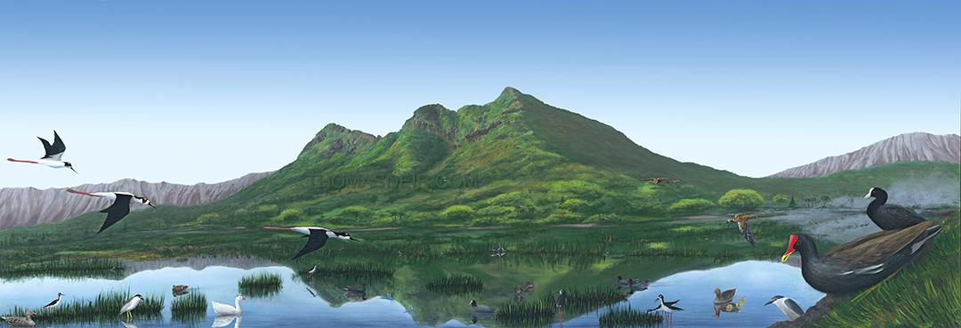 Hawaii Landscape Kaelepulu Wetland