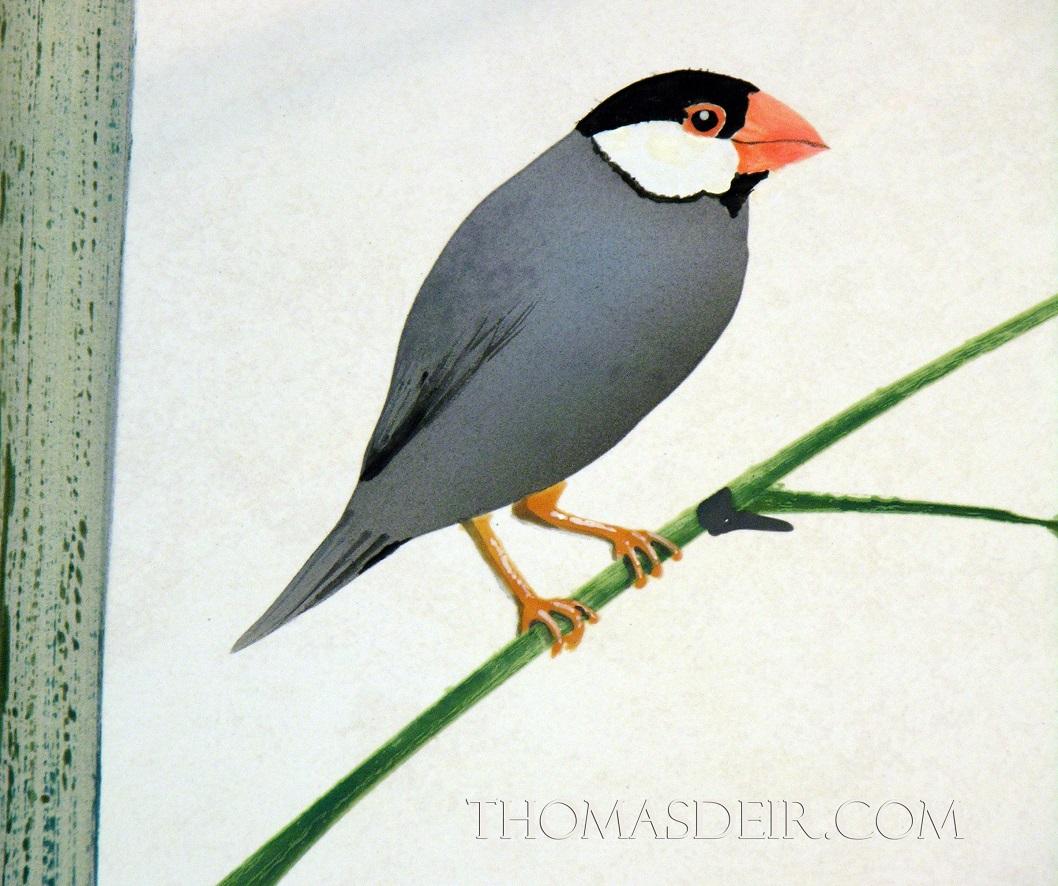 Indonesian Bamboo Shower Java Sparrow Bird-c